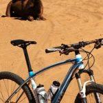 Polacy, rowery i piaski Sahary…
