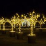 Na Otwarcie Królewskiego Ogrodu Światła będą bić Rekord Polski