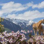 Urlop na przełomie zimy i wiosny w gospodarstwach agroturystycznych Roter Hahn